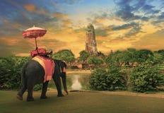 Elefant, der mit dem thailändischen Königreichtraditionszubehör steht vor alter Pagode im Ayuthaya-Welterbestättegebrauch für ank Stockfotografie