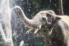 Elefant, der mit Wasser im Zoo spielt Stockfoto