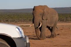 Elefant, der in Richtung zum touristischen Fahrzeug geht Stockbilder