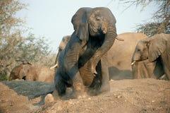 Elefant, der sich hinsitzt Lizenzfreie Stockbilder