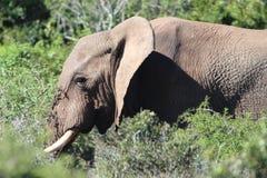 Elefant in der Sonne Lizenzfreie Stockfotografie