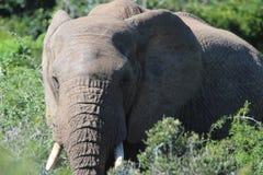 Elefant in der Sonne Lizenzfreie Stockbilder