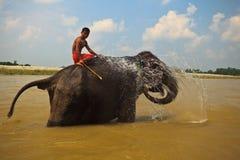 Elefant, der Wasser im Fluss in Nepal sprizt Stockfoto