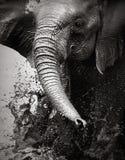 Elefant, der Wasser spritzt Lizenzfreies Stockbild