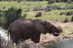 Elefant an der Wasserstelle Lizenzfreies Stockfoto