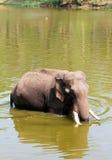 Elefant, der weg in der Sommerhitze abkühlt stockbild