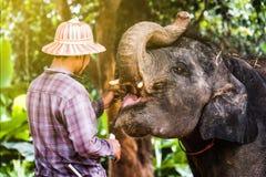 Elefant-Dorf in Thailand stockbilder