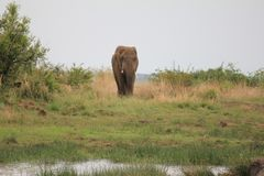 Elefant an einem waterhole Lizenzfreie Stockfotografie