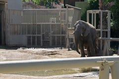 Elefant an einem Zoo stockfoto