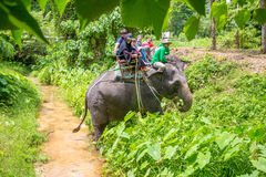 Elefant elefantritt, - Bangpa safari i en härlig skogconv Arkivfoto