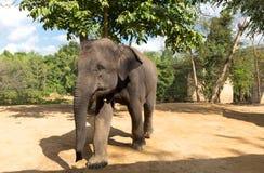 Elefant extérieur Photos libres de droits