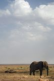 elefant för 020 djur Arkivbild