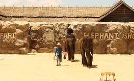 Elefant för Editorial--2ndshowgrupp på golvet i zoo royaltyfria bilder