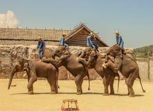 Elefant för Editorial--3rdshowgrupp på golvet i zoo royaltyfri fotografi