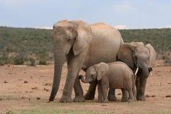 Elefant-Familie Stockbild