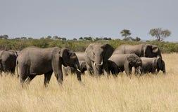 Elefant-Familie Lizenzfreies Stockbild