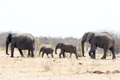 Elefant-Familie auf dem Weg Lizenzfreies Stockbild