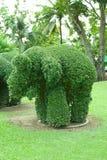 Elefant format träd Royaltyfri Fotografi