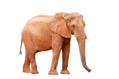 Elefant getrennt lizenzfreie stockfotografie