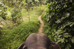 Elefant in giungla Immagini Stock