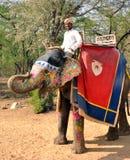elefant hans mahout arkivbild