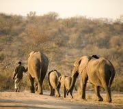 elefant hans mahout arkivbilder