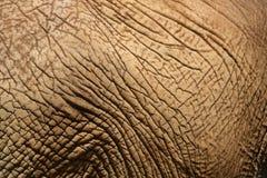 Elefant-Haut 3 Lizenzfreies Stockfoto