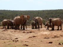 Elefant-Herde Lizenzfreie Stockfotos