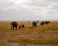 Elefant-Herde lizenzfreies stockbild