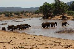 Elefant-Herde, die den Fluss Samburu kreuzt Stockfotos