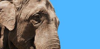elefant huvud för closeup Arkivbilder