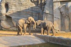 Elefant i den Everland zoo royaltyfria foton