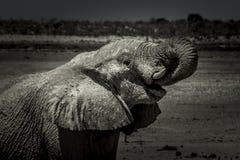 Elefant i mörkret Arkivfoto
