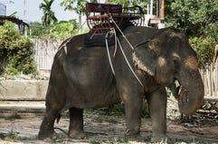 Elefant i zoo Royaltyfri Bild