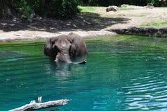 Elefant im blauen Wasser Lizenzfreie Stockfotografie