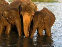 Elefant im Fluss Stockfotografie