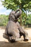 Elefant im Freien Stockbild