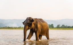 Elefant im Gandak-Fluss in Nationalpark Chitwan, Nepal stockbild