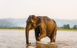 Elefant im Gandak-Fluss in Nationalpark Chitwan, Nepal lizenzfreies stockfoto