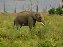 Elefant im Jim Corbett-Staatsangehörigpark-cc$iii Lizenzfreies Stockfoto