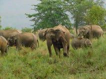 Elefant im Jim Corbett-Staatsangehörigpark-cc$iv Lizenzfreies Stockfoto