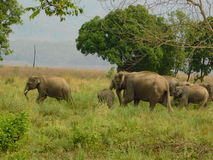 Elefant im Jim Corbett-Staatsangehörigpark-cc$v Lizenzfreie Stockfotografie