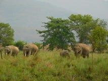 Elefant im Jim Corbett-Staatsangehörigpark-cc$vi Lizenzfreies Stockbild