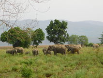 Elefant im Jim Corbett-Staatsangehörigpark-cc$viii Lizenzfreies Stockbild