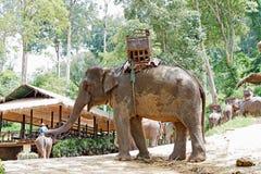 Elefant im Park Stockbild