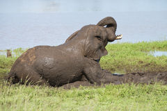 Elefant im Schlammbad Lizenzfreies Stockbild