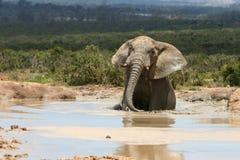 Elefant im Wasser lizenzfreies stockfoto