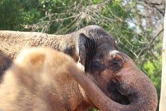 Elefant im Zoo in Stuttgart in Deutschland lizenzfreies stockfoto