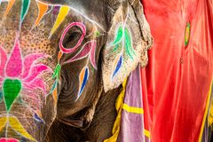 Elefant Indien Jaipur, stat av Rajasthan Arkivfoton