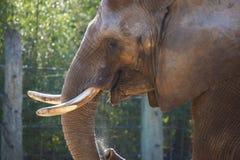Elefant isst lizenzfreie stockfotos